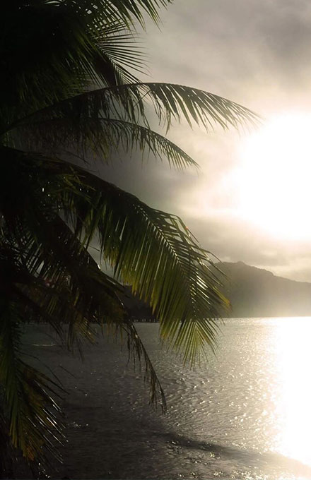 French Polynesia, Bora Bora island, backlight on sunset with high constrast on a palm tree and Mount Otemanu. (Nos Dren)